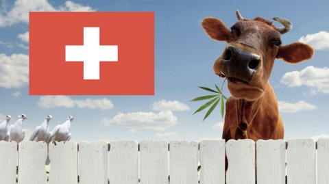 Switzerland: Marijuana To Be Legalized in Pilot Projects