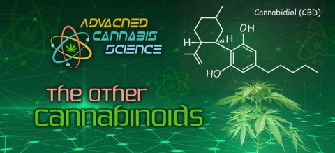 The Other Cannabinoids: CBD and CBDV