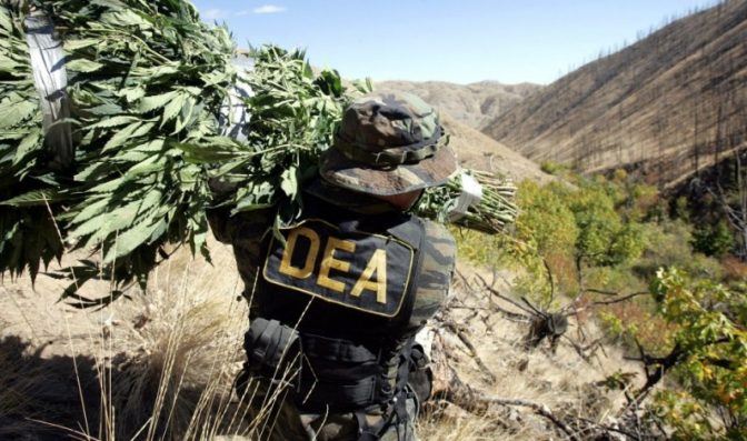 dea research pot