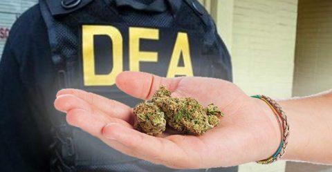 DEAjà Vu: Agency Refuses to Reschedule or Deschedule Marijuana, Again