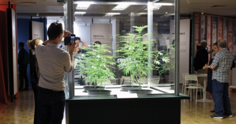 Marijuana at the Museum