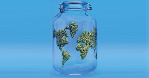 Book Review: Joe Dolce's Excellent Cannabis Adventure