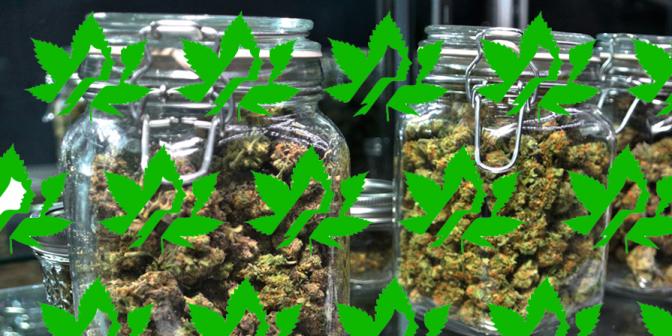 cannabis industry