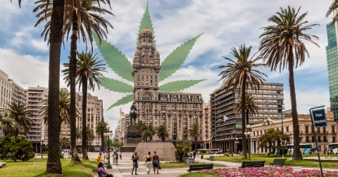 Legal Cannabis Sales Underway in Uruguay