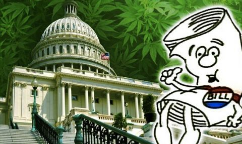 From Booker to Hatch: Four Major Marijuana Bills on Capitol Hill