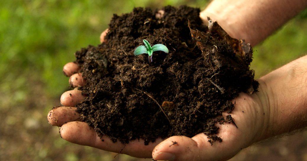 seven steps to having a successful outdoor cannabis garden