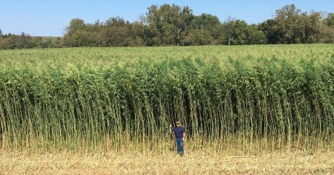 Hemp to the Future: U.S. and Canada Industrial Crops on the Rise