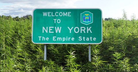 Task Force Recommends Regulating Recreational Cannabis in New York