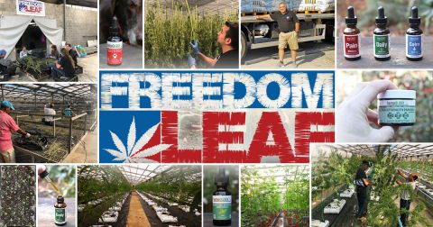Freedom Leaf Dives Into the Hemp-CBD Market