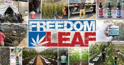 Freedom Leaf Dives Into the Hemp-CBD Market