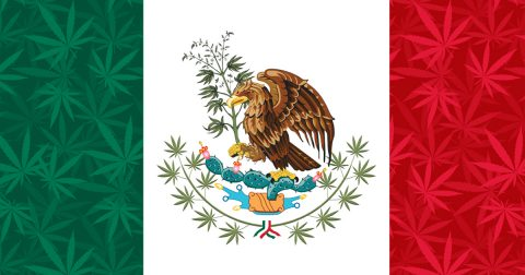 Mexican Marijuana Legalization: A View from South of the Border