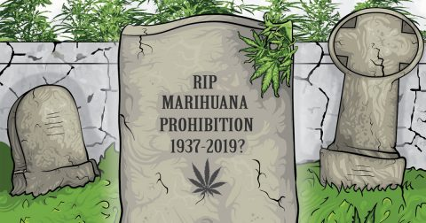 How to Legalize Marijuana in 2019